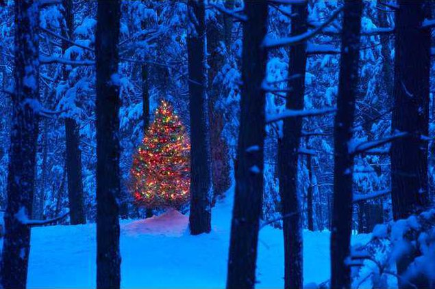 christmas-in-the-woods