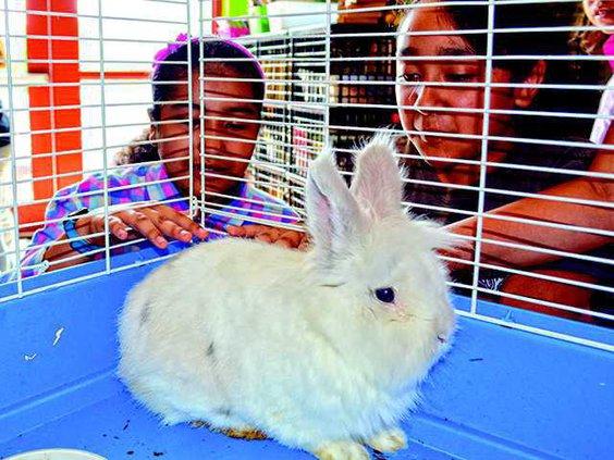Bun Bun rabbit