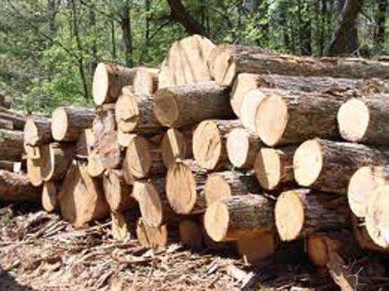 timber w sm
