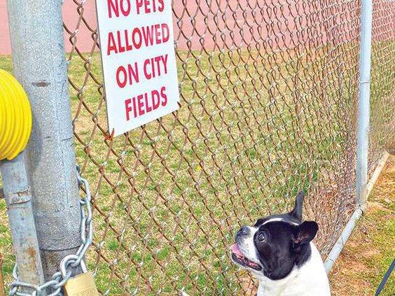 dog-park1WEB