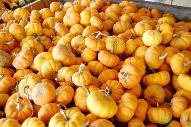 Pumpkins-for-web