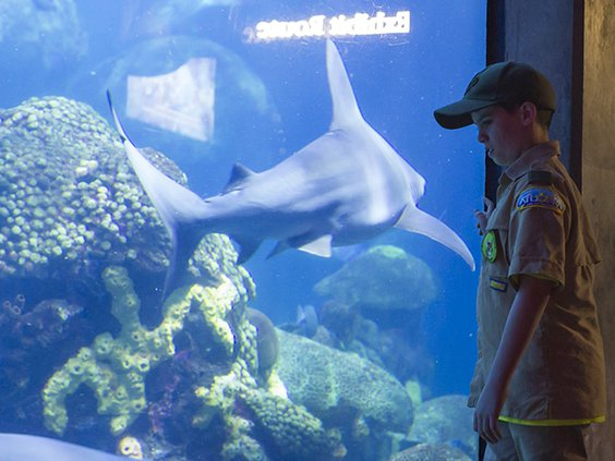 TN Aquarium Scout Days 2019 2.jpg
