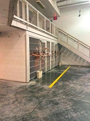 jail overcrowding2.jpg