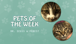 Pets of the Week - Dr. Seuss & Forest