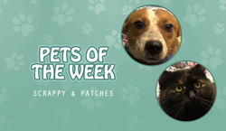 potw scrappy n patches