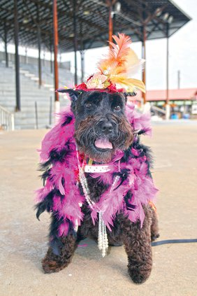 Dog Show-Costume winner.jpg