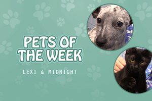 Pets of the Week - Lexi & Midnight